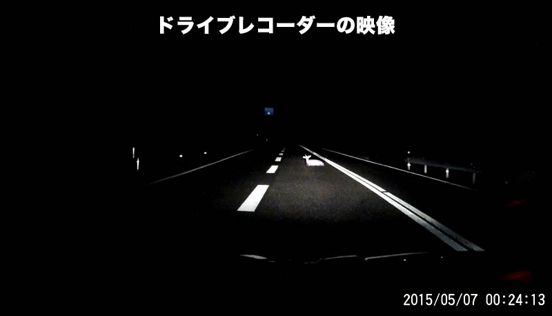 ドライブレコーダーは見た!「道路で涼んでいちゃだめですよ~。危ないし、シカられちゃうよ!」